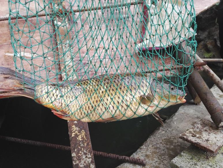 2、网起河鱼.jpg